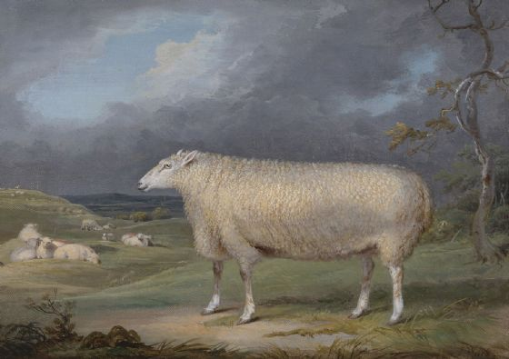 Ward, James: A Border Leicester Ewe. Fine Art Print/Poster. Sizes: A4/A3/A2/A1 (002289)